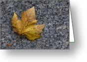 Fallen Leaf Greeting Cards - Fallen Leaf Greeting Card by Robert Ullmann