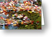 Maple Leaves Greeting Cards - Fallen Leaves Birch River Greeting Card by Thomas R Fletcher