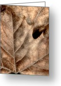 Abstract Nature Greeting Cards - Fallen Leaves II Greeting Card by Tom Mc Nemar