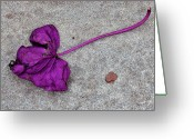 Fallen Leaf Greeting Cards - Fallen Purple Leaf Greeting Card by Robert Ullmann