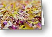 Reds Of Autumn Greeting Cards - Fallen willow tree leaves Greeting Card by Steven Poulton