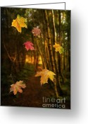 Red Maple Greeting Cards - Falling Leaves Greeting Card by Christopher Elwell and Amanda Haselock