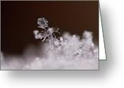 Winter Art Greeting Cards - Falling Snowman Greeting Card by Rona Black