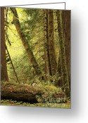 Forest Floor Photo Greeting Cards - Falling Trees in the Rainforest Greeting Card by Carol Groenen