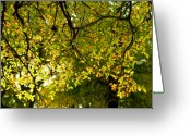 Turning Leaves Greeting Cards - Falls Unique Light Greeting Card by Karen Musick