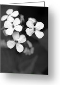 Black And White Floral Greeting Cards - Family Greeting Card by Amanda Barcon