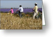 12-13 Years Greeting Cards - Family contemplating lavender field during bicycle trip Greeting Card by Sami Sarkis