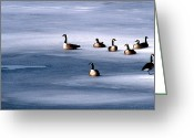 Wildlife Photos Greeting Cards - Family Group Greeting Card by Skip Willits