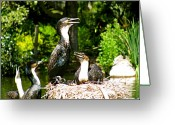 Size Different Greeting Cards - Family Nest Greeting Card by Debra     Vatalaro