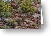 Black Mesa Greeting Cards - Family Of Bighorns Greeting Card by Stephen Campbell