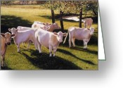 Charolais Greeting Cards - Family Portrait Greeting Card by Denny Bond