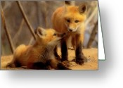 Vulpes Greeting Cards - Family Greeting Card by Thomas Young
