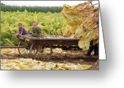 Amish Farms Greeting Cards - Family Tobacco Harvest Greeting Card by Joyce Huhra