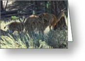 Fawns Greeting Cards - Family Values Greeting Card by Donna Blackhall