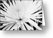 Pure Digital Art Greeting Cards - Fancy Flower Greeting Card by Marsha Heiken