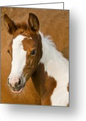Quarter Horse Photo Greeting Cards - Fancy Greeting Card by Ron  McGinnis