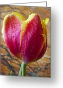 Yellows Greeting Cards - Fancy Tulip Greeting Card by Garry Gay