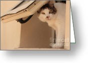 Portraits Photo Greeting Cards - Fantasia Heres Looking at You Kid Greeting Card by Anita Dale Livaditis