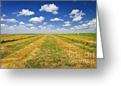 Meadow Greeting Cards - Farm field at harvest in Saskatchewan Greeting Card by Elena Elisseeva