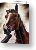 Ilse Kleyn Greeting Cards - Farm Horse Greeting Card by Ilse Kleyn