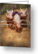 Action Sport Art Greeting Cards - Farm - Pig - Getting past hurdles Greeting Card by Mike Savad