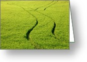 Farm Greeting Cards - Farm Tracks Greeting Card by Mike  Dawson