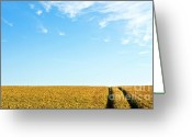 Cornfield Photo Greeting Cards - Farmland to the horizon 1 Greeting Card by Heiko Koehrer-Wagner