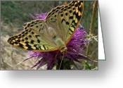 Mediterranean Butterfly Greeting Cards - Fashion Show Greeting Card by Eric Kempson