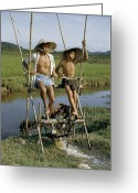Routine Greeting Cards - Father And Son Irrigate Rice Fields Greeting Card by J. Baylor Roberts