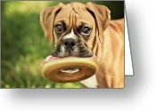 Camera Greeting Cards - Fawn Boxer Puppy Greeting Card by Jody Trappe Photography