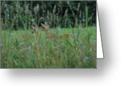 Fawns Greeting Cards - Fawns in purple Greeting Card by Emily Stauring