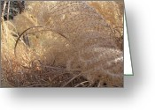 Grass Pyrography Greeting Cards - Feather Grass Greeting Card by Arlene Carmel