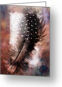 Graphic Pyrography Greeting Cards - Feather Greeting Card by Mauro Celotti
