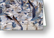 Tern Greeting Cards - Feathers- Feathers Everywhere Greeting Card by E Luiza Picciano