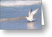 Tern Greeting Cards - Feathers Grace Greeting Card by E Luiza Picciano