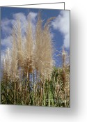 Feathery Greeting Cards - Feathery Grasses Greeting Card by Methune Hively