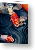 Fish Pond Painting Greeting Cards - Feeding Frenzy Greeting Card by Denny Bond