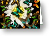 Pencil Drawing Digital Art Greeting Cards - Feeding Frenzy Greeting Card by Garry Staranchuk