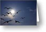 Backlit Greeting Cards - Feeding Frenzy Greeting Card by Skip Willits