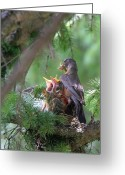 Colorado Creatures Greeting Cards - Feeding The Babies Greeting Card by Crystal Garner