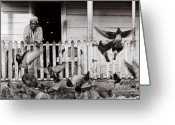Old Lady Greeting Cards - Feeding the Pigeons-St Lucia Greeting Card by Chester Williams