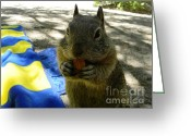 Beach Towel Photo Greeting Cards - Feel Like a Nut Greeting Card by DJ Laughlin