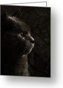 Head-shot Greeting Cards - Feline perfection Greeting Card by Laura Melis