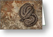 Venom Greeting Cards - Female European Adder on Sandstone Greeting Card by Andy Astbury
