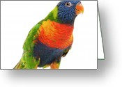 Full-length Greeting Cards - Female Rainbow Lorikeet - Trichoglossus Haematodus Greeting Card by Life On White