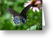 Spicebush Swallowtail Greeting Cards - Female Spicebush Swallowtail Greeting Card by Kathy Gibbons