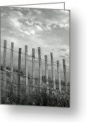 Bamboo Greeting Cards - Fence At Jones Beach State Park. New York Greeting Card by Gary Koutsoubis