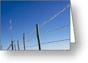 Barbed Wire Fences Photo Greeting Cards - Fence covered in hoarfrost in winter Greeting Card by Bernard Jaubert