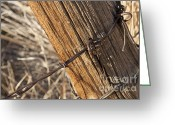 Rust Greeting Cards - Fence Post Greeting Card by Francis Riley