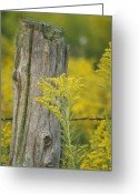 Fence Row Greeting Cards - Fence Post Greeting Card by Michael Peychich